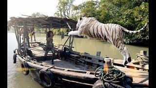 Chinese Action Movies - Tiger Assassin - New Adventure Movies English Subtitles