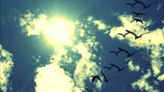 De Hofnar - Vogelvlucht