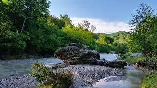 Звуки природы, Шум Реки и Пение Лесных Птиц, 3 часа сна или Спокойного Релакса