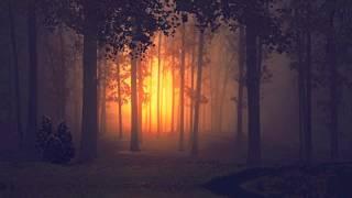 Till Death - The Dark Woods
