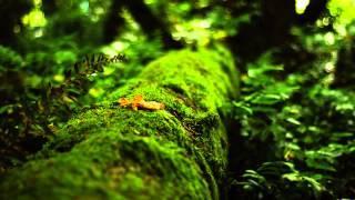 Gaia Healing Earth's Frequency 7.83hz Music (Schumann Resonance)