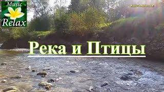 Звуки Природы | Шум Реки и Лесные птицы - 2 часа