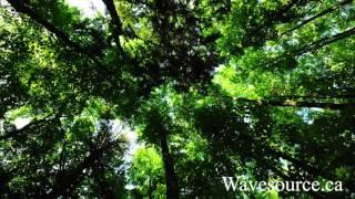 Source Healing Journeys Full Album ~ Relaxation Meditation Yoga Sleep