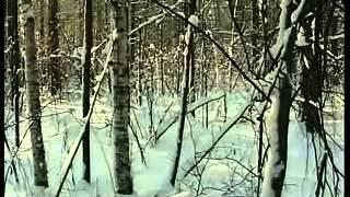Mystery of Dyatlov's Pass part 1