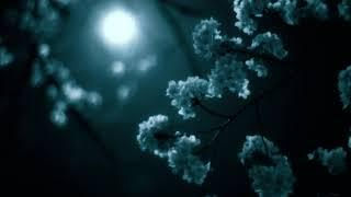 Night Blossom One Hour of Dark Ambient Music