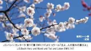 卒業式に使われるクラシック名曲集・Graduation Ceremony Classical Music Collection(長時間作業用BGM)