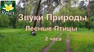 Звуки природы, Звуки Леса, пение птиц  - 2 часа Сна или Релакса на Природе