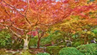 Theta Healing Meditation ~ Bliss Relaxation and Clarity Pure Binaural Beats 7Hz
