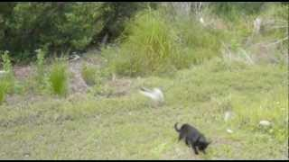 FUNNIEST CAT video 2012: BIRD vs CAT (BIRD WINS!!)
